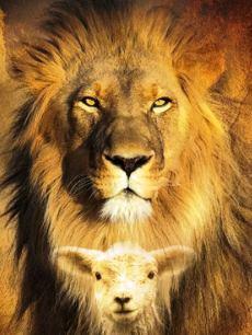 lionlamb